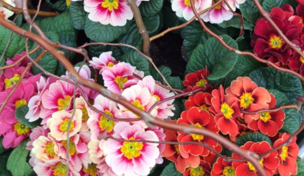 Pflanzenschutz bei der Gärtnerei Pirzer